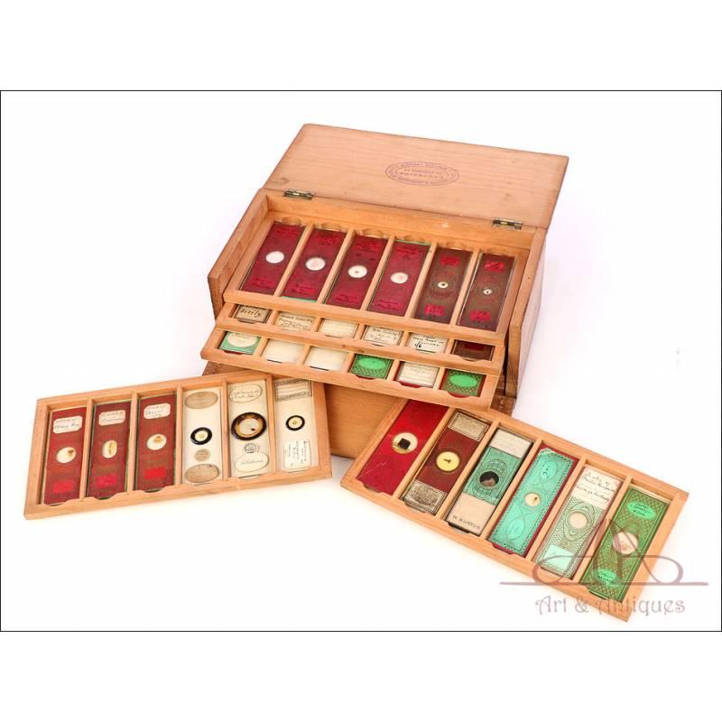 Colección de 60 Preparados Antiguos para Microscopio. Varias Épocas. En Estuche