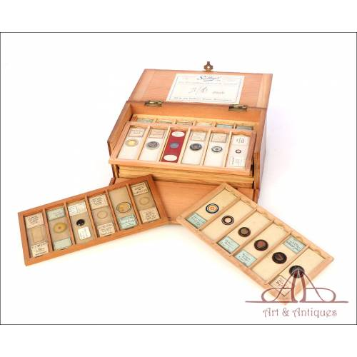Colección de 60 Preparados Antiguos para Microscopio. 1880-1930