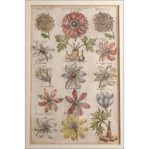 Magnífico Grabado Original de Emanuel Sweert. Alemania, S. XVII. En Muy Buen Estado
