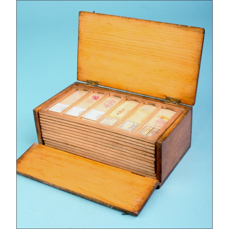 Colección de 72 preparados para microscopio de los años 50.