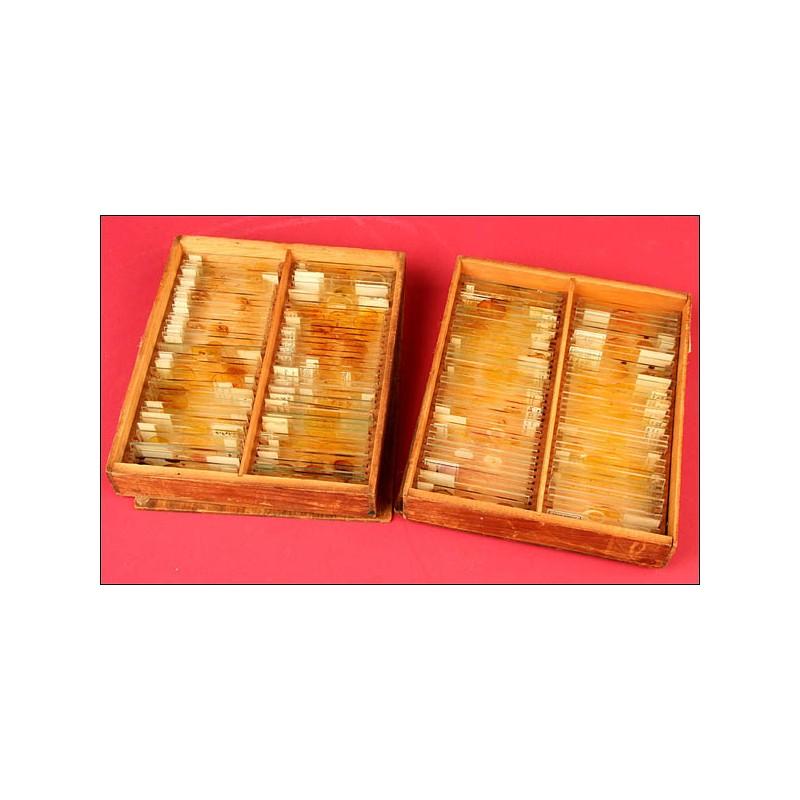 Dos Cajas Antiguas con Preparados para Microscopio. Años 40