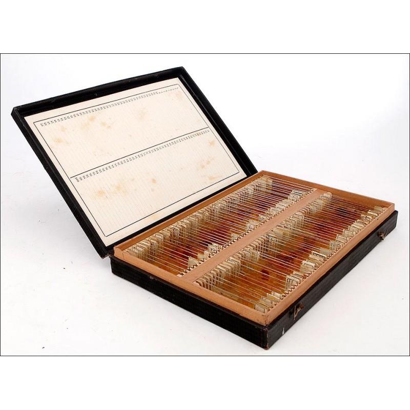 Completo Conjunto de Preparados para Microscopio. Alemania, Años 20