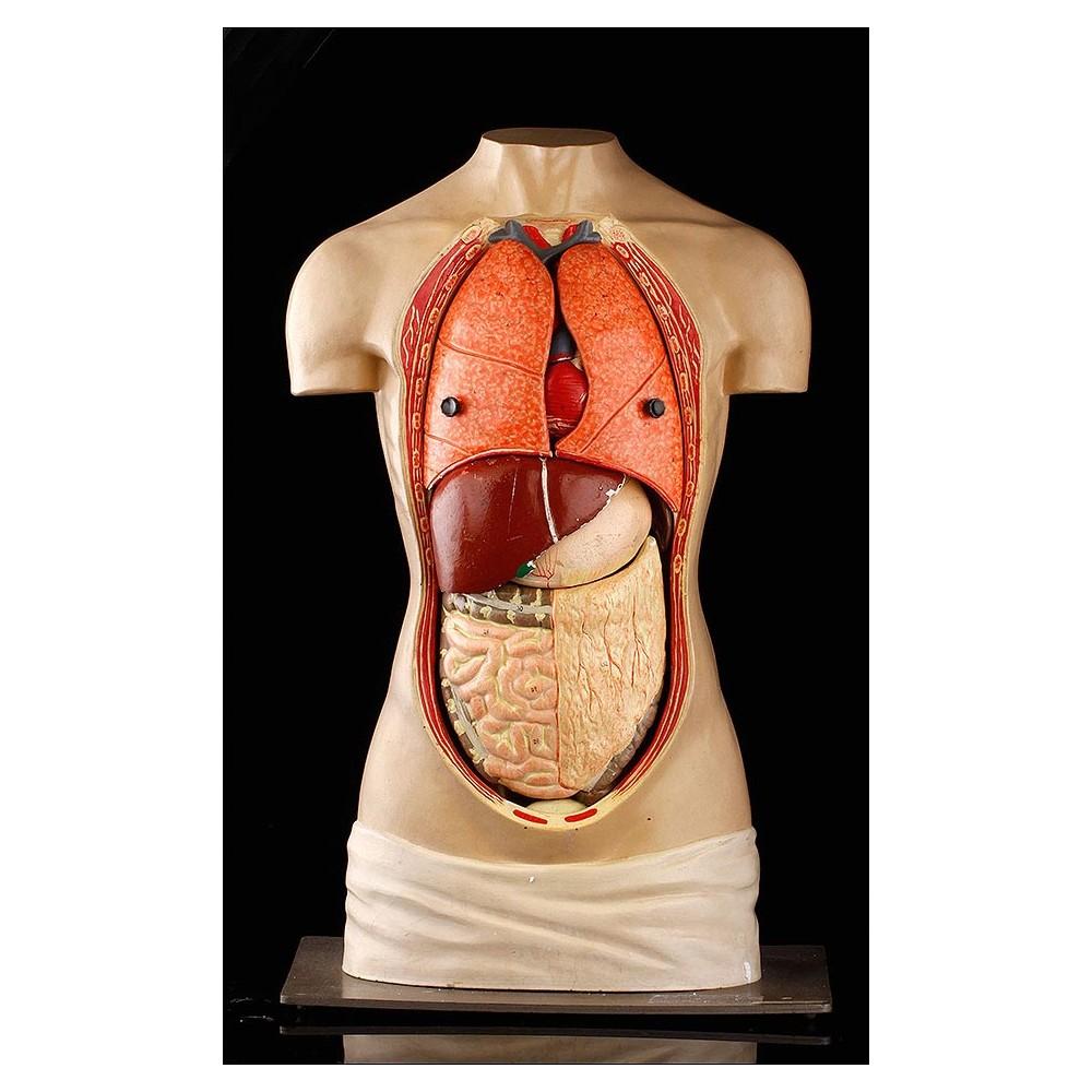 Torso Desmontable para el Estudio de la Anatomía. Año 1957. Completo